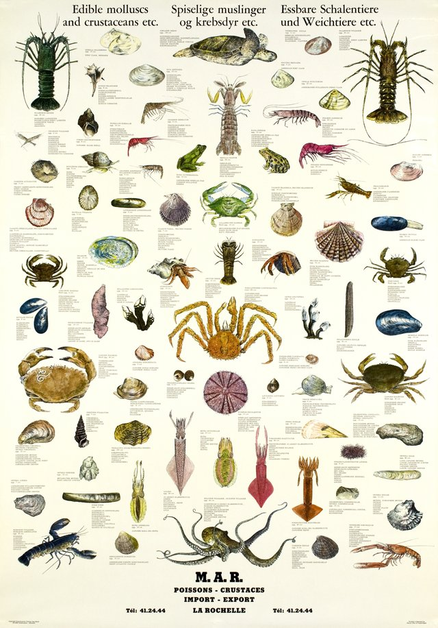 Edible molluscs and crustaceans