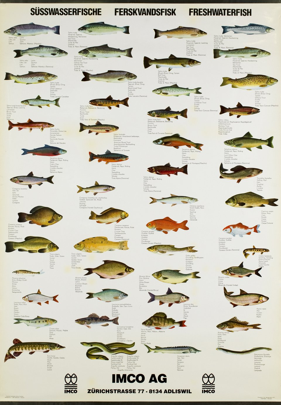 Fresh Water Fish – Vintage poster –  ANONYME – 1970